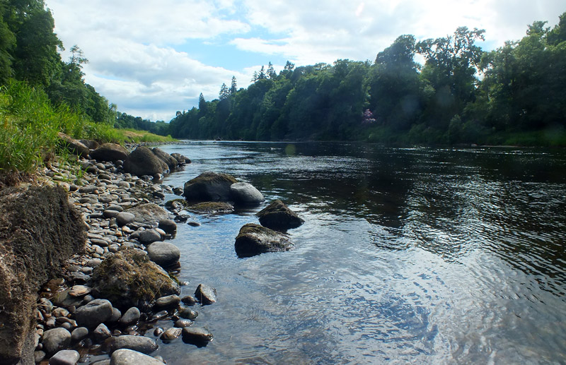 Tay Salmon Fisheries